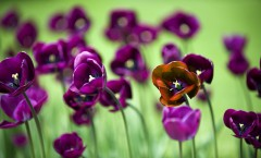 purple-flowers-images-and-wallpapers-30